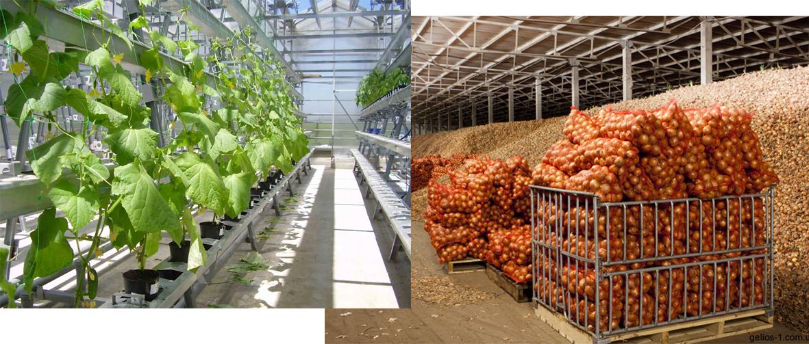 Аграрно-промышленный парк появится в Якутии
